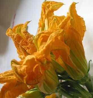 Ricetta: Mezzemaniche con i fiori di zucca