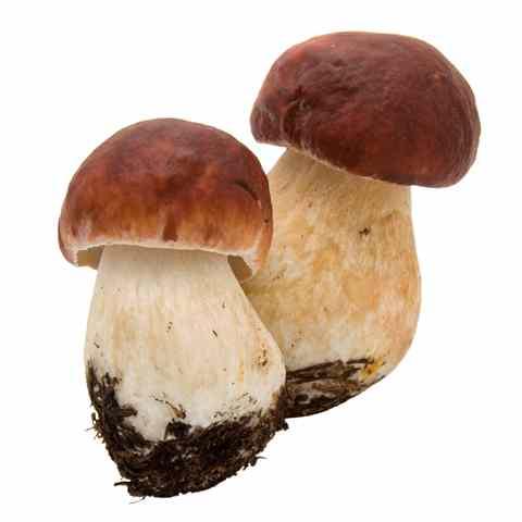 Filetti di petto di pollo con panna e funghi